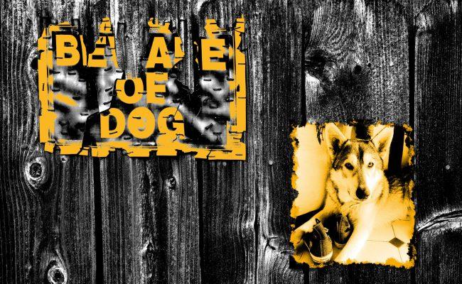 PUNK + ROCKER - Beware of Dog - Milow - Keeper of the chucks!